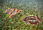 коттеджный посёлок Черничная поляна